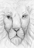 Lion face pencil sketch. Hand drawn pencil sketch of an old wise lion - king of the beasts Royalty Free Stock Image