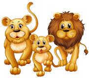 Lion on family with cute cub Stock Photos