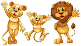 Lion family with one little cub Stock Images