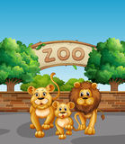 Lion family in the zoo. Illustration Stock Photo