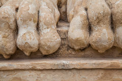 Lion feet royalty free stock images