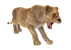 Lion femelle Images stock