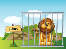 A lion in a fence Stock Images