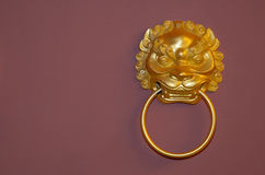 Lion fetching ring Royalty Free Stock Photo