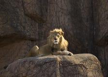 Lion fier image libre de droits