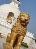 Lion. Fierce and beautiful stock photos