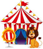 A lion and a fire ring in front of the circus tent Royalty Free Stock Photography