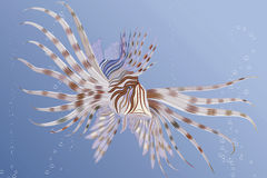 Lion fish. Vector illustration of an exotic lion fish swimming underwater Royalty Free Stock Photo