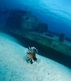 Lion fish and ship wreck Stock Image