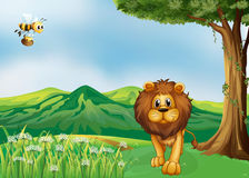 A lion and a flying bee at the hills Royalty Free Stock Images