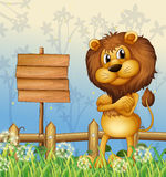 A lion in the forest and the empty signboard Stock Photos