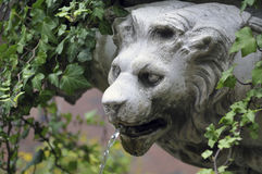 Lion fountain Stock Photos