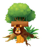 A lion in front of an empty wooden signboard Royalty Free Stock Photography