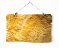 Lion fur notice board Royalty Free Stock Photos