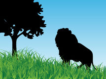 Lion in the grass Stock Photo