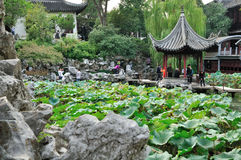 Lion Grove Garden royalty free stock images