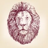 Lion hand drawn vector llustration Royalty Free Stock Image