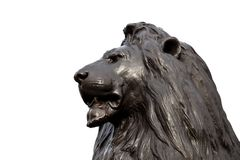 Lion head Stock Image
