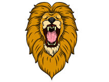 Lion Head Photo stock