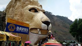 Lion Head Fotos de archivo libres de regalías