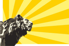 Lion head. Vector illustration of lion on sunbeams background Stock Photos
