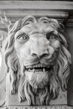Lion the head. Stock Photography