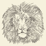 Lion head ethnic style illustration drawn sketch Stock Photos
