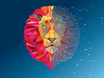 Lion head in geometric pattern with star line. Lion head  geometric pattern with star line Stock Photography