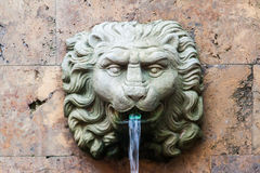 Lion Head Hacienda Santa Barbara Bogota Colombia Royalty Free Stock Photography