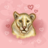 Lion head illustration on pink background. Illustration of lion cat head on pink lovely background Royalty Free Stock Photos