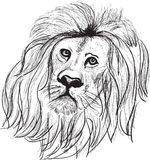 Lion head isolated on white Royalty Free Stock Photography