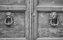 Lion head knockers on an old wooden door. In Florence,Tuscany, Italy. black and white stock photo