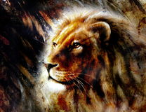 Lion head with a majesticaly peaceful expression Royalty Free Stock Image