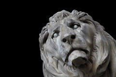 Lion head munich Stock Photography