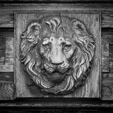 Lion head relief on the facade Stock Images