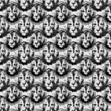 Lion head repeat seamless pattern in greyscale Stock Photo