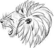 Lion head sketch isolated on white Royalty Free Stock Photos