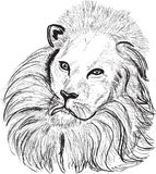 Lion head sketch on white Stock Image