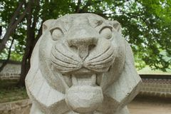 Lion head Stock Photo