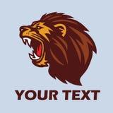 Lion Head Vector arrabbiato Immagine Stock