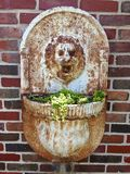 Lion head wall planter royalty free stock photo