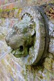 Lion head waterspout in an English garden royalty free stock images