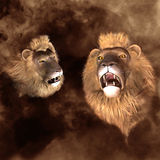 Lion Heads Royalty Free Stock Image