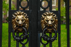 Lion Heads on the Main Gates of Brown University. Royalty Free Stock Photography