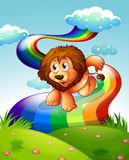A lion at the hilltop with a rainbow Stock Photos