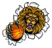 Lion Holding Basketball Ball Breaking Background Stock Image