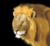 Lion illustration creative vector drawing Royalty Free Stock Photos