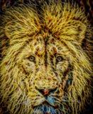 Lion Illustration Royalty Free Stock Image