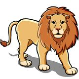 Lion Stock Images