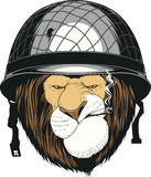 Lion In A Soldier`s Helmet Royalty Free Stock Image